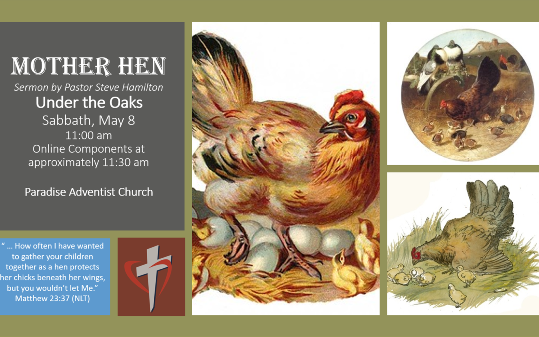 Sabbath, May 8 ― Mother Hen by Pastor Steve Hamilton